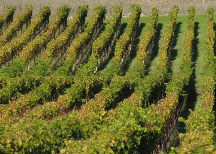 Wine Country sweepstakes win free trip to Sonoma County California