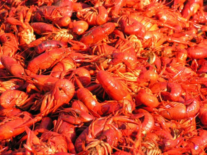 50% off Dallas Bugs & Brews Festival cajun crawfish po boys music