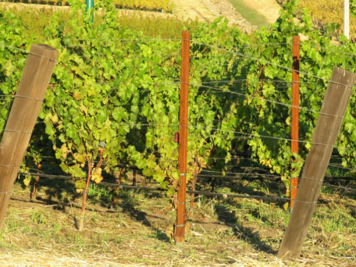 Discounted price for guided tour of wineries from San Francisco California