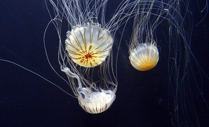 Discounted tickets to Aquarium of the Bay San Francisco California