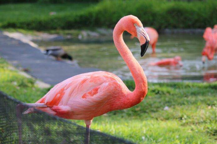 Save money on San Diego trip book hotel & tickets to SeaWorld zoo LEGOLAND