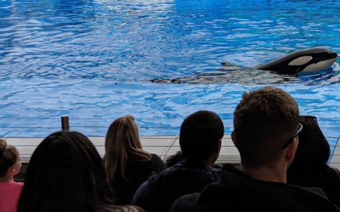 SeaWorld San Antonio Texas flash sale over half off tickets anniversary deal