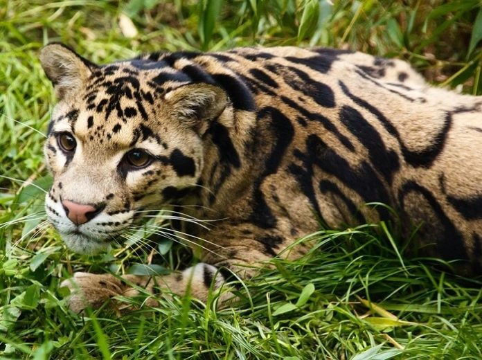 Discounted admission to Bali Safari & Marine Park see animals from Indonesia Africa & India