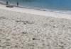 Costa Rica Four Seasons luxury travel sweepstakes win free trip