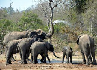 Best Hoedspruit South Africa lodges near Kruger National Park