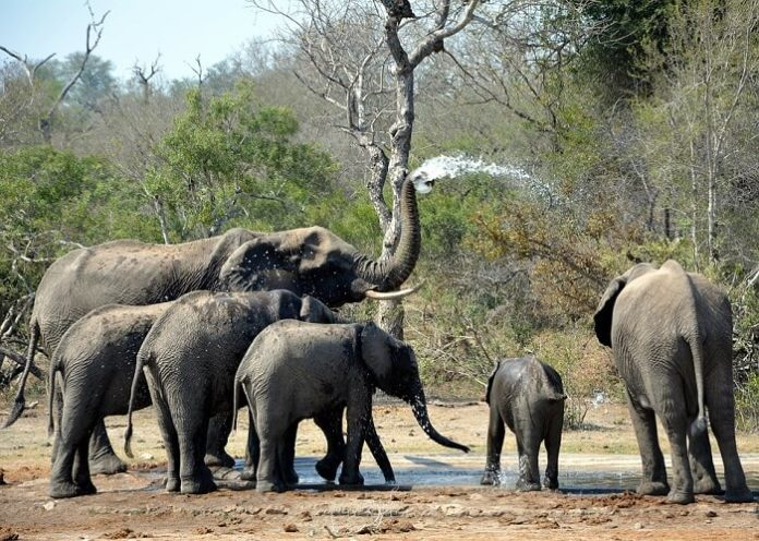 Best Hoedspruit South Africa lodges near Kruger National Park