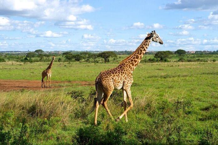 Nairobi Kenya hotels under $100 Best Western Mdawida Bethel Xperience West Breeze