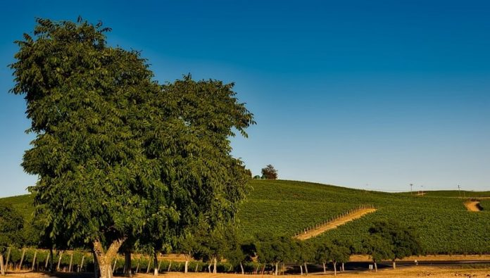 Win a trip to Benovia Winery's Martella Estate Vineyard in Sonoma California