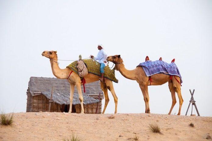 Discount price for Dubai UAE desert & city tour
