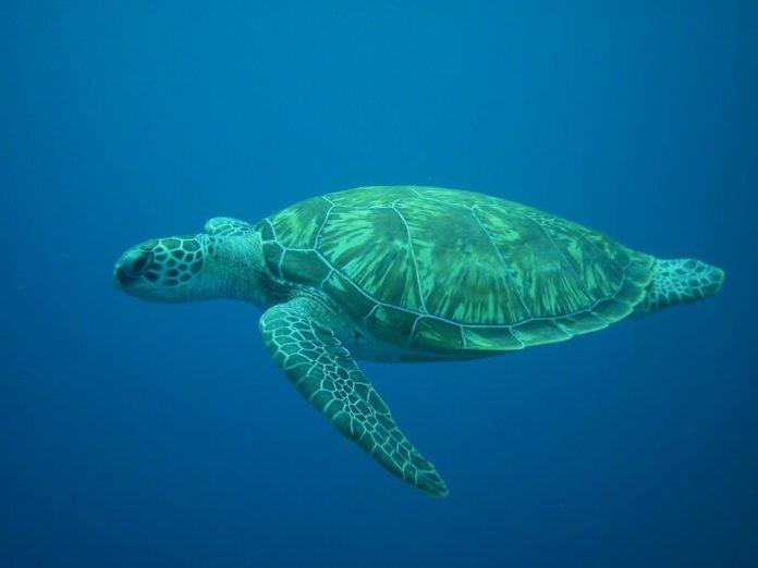 Save money on Charleston trip with discounted admission to South Carolina Aquarium