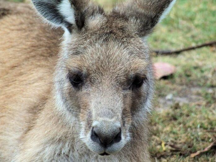 Save on admission to Kentucky zoo see lemurs, kangaroos, pythons, dingoes,