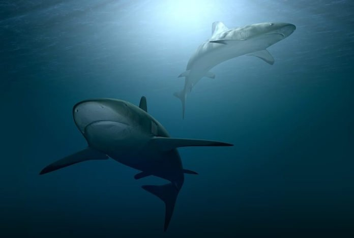 Win a free 5-day Shark week diving cruise & flight & hotel stay in San Diego