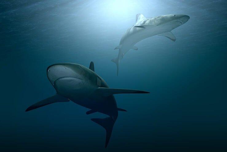 Win A Shark Diving Cruise Green Vacation Deals