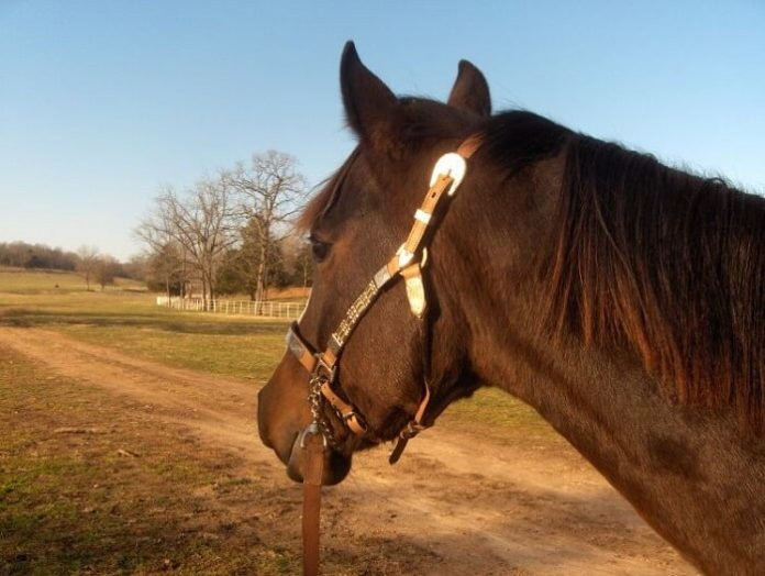 Discounted tickets for River Ranch at Texas Horse Park in Dallas