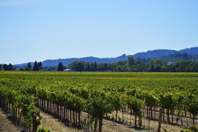 Discount admission to Zinfandel Stories from Sonoma County