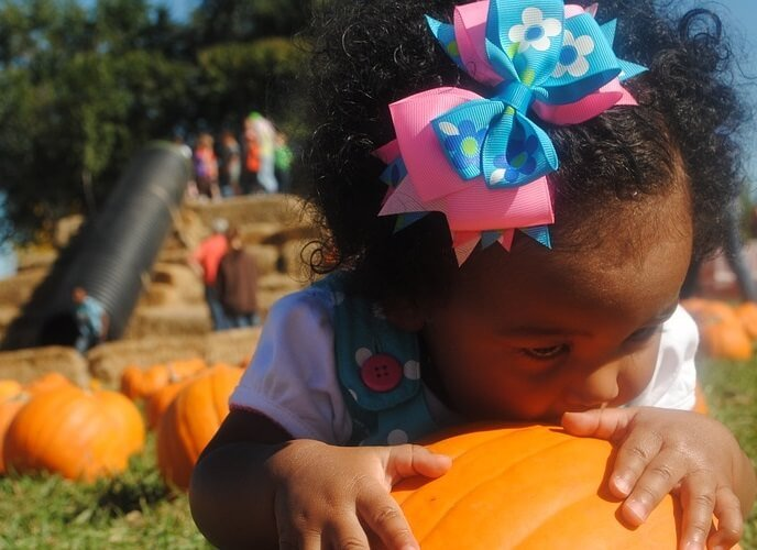 Discounted admission to Santa Rosa pumpkin patch family farm & corn maze