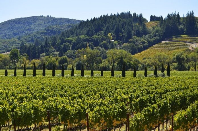 Sonoma County sweepstakes win free trip to California wine country