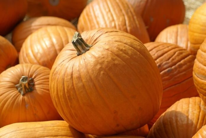 Reasons your family should visit Great Pumpkin Fest in Kings Dominion Virginia