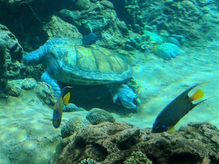 Discounted SeaWorld San Antonio Texas annual passes