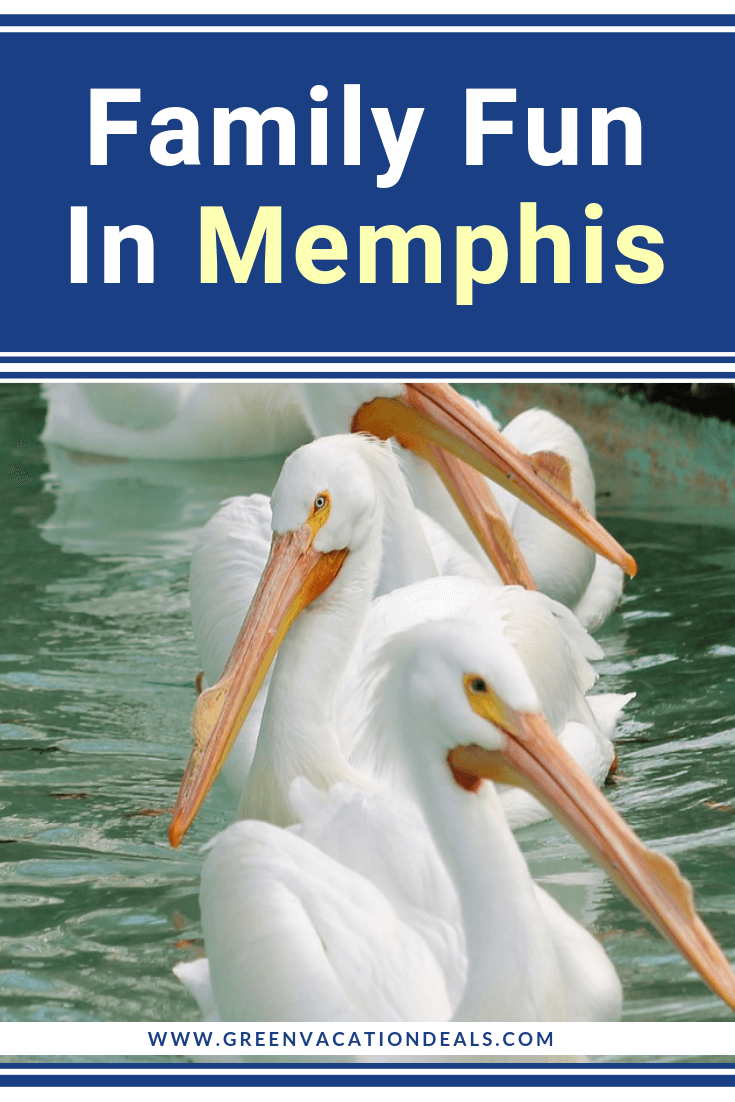 If you're planning a family trip to Memphis, Tennessee, then check out our list of fun activities for families: Children's Museum Of Memphis, Memphis Zoo, Crazy Dash, Crystal Shrine Grotto, Shelby Farms Park, Golf & Games Family Park, Allen's Kayaking Adventures, Battlefront Laser Tag & Paintball, Go Ape Treetop Adventure Course (with ziplines, Tarzan swings & obstacles), Uncle Buck's Fish Bowl & Grill, walking & bicycle tours, horse drawn carriage tours, Segway tour, etc.