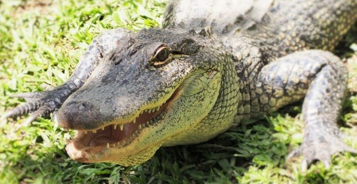 Save money on crocodile safari from Airlie Beach see birds, reptiles