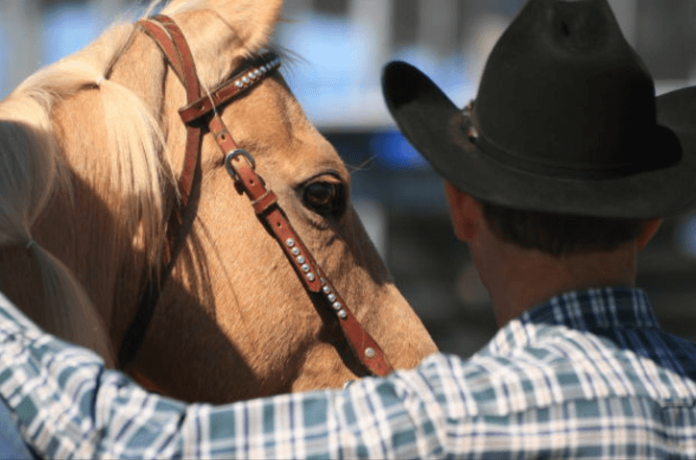 Discounted admission to The National Western Stock Show in Denver Colorado