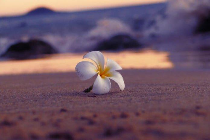 Maui Hawaii Luxury Hotel beach travel
