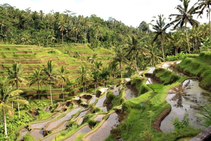 Win a free vacation in Bali Indonesia