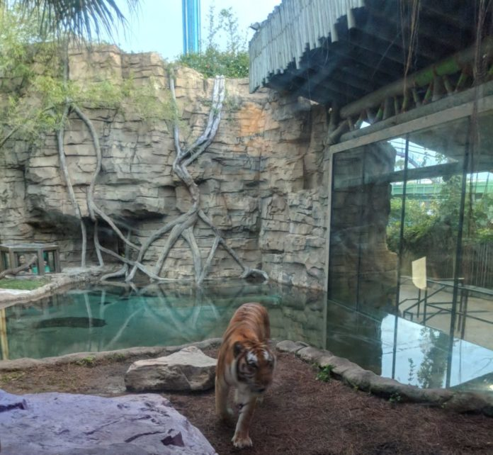 Most Unique experiences at Busch Gardens Tampa Bay Florida