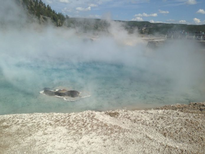 A picture from Yellowstone National Park. How to find the best tour to Yellowstone out of Salt Lake City.