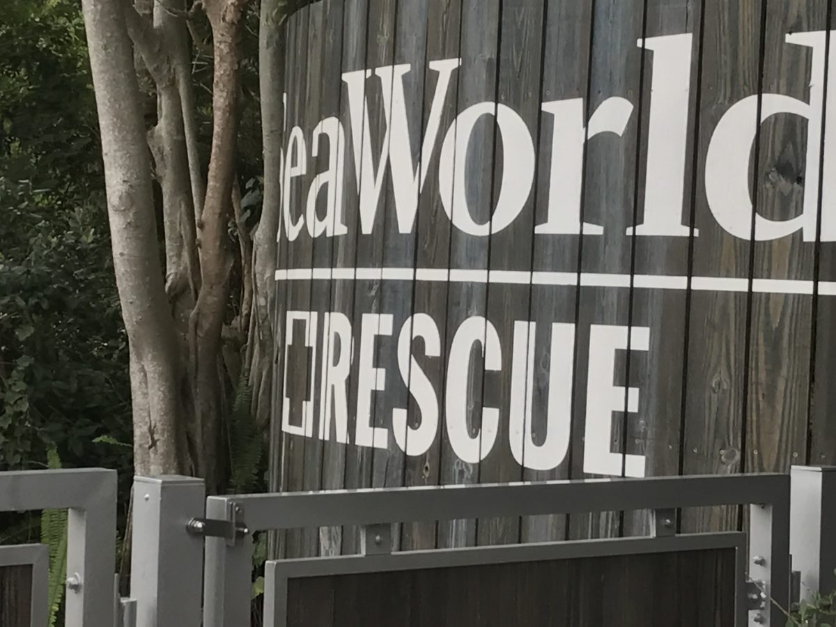 Hilton Garden Inn Orlando is a preferred hotel partner of SeaWorld so you get to take a free Rescue Tour