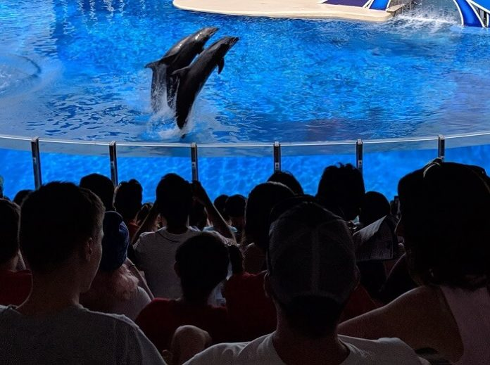 Save 25% on tickets to SeaWorld Texas