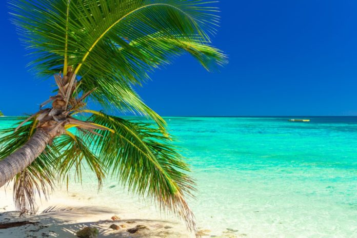 Tropical beach with coconut palm trees and clear lagoon on Fiji Islands. Find out how to win a free trip there