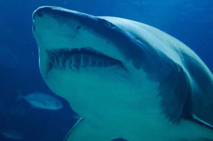 Enter Landshark Dive Getaway Sweepstakes & win a free vacation