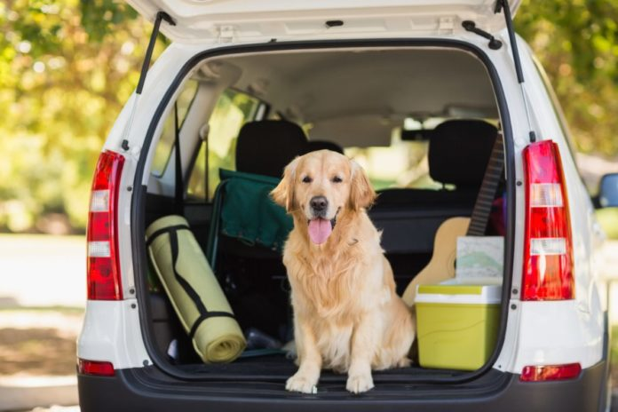 Enter Nationwide - Road Trip With Rover Sweepstakes & win pupsaver seat, gas card, Kimpton hotel card
