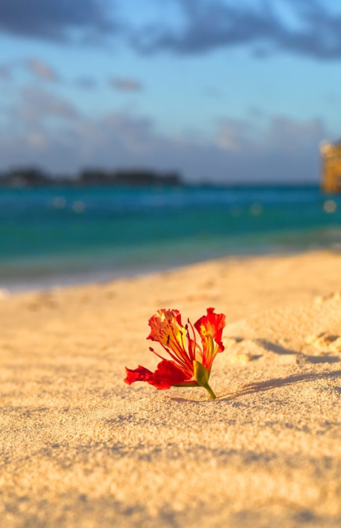 Enter to win a free vacation in a Sandals or Beaches resort of your choosing