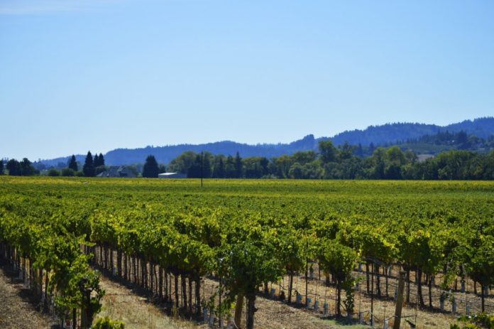 How to win a free trip to California Wine Country