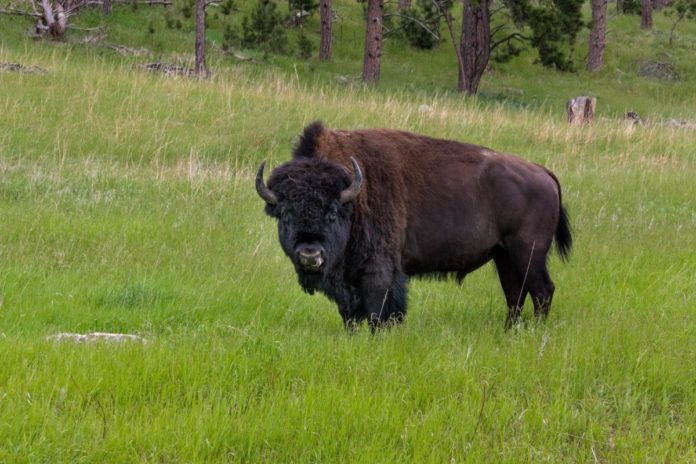 How to save money when traveling to Custer State Park with discounted hotel rates