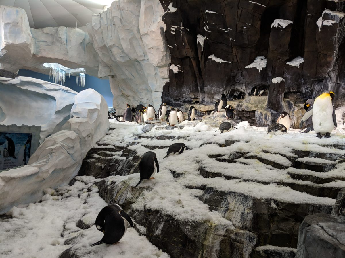 Escape the Orlando Florida sun in the summer by stepping in the penguin exhibit at SeaWorld Orlando