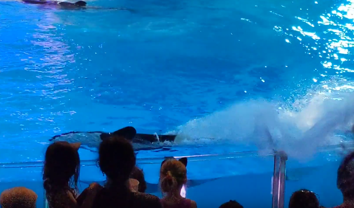 Getting splashed by whales & dolphins helps cool off an Orlando Florida summer day when you visit SeaWorld theme park