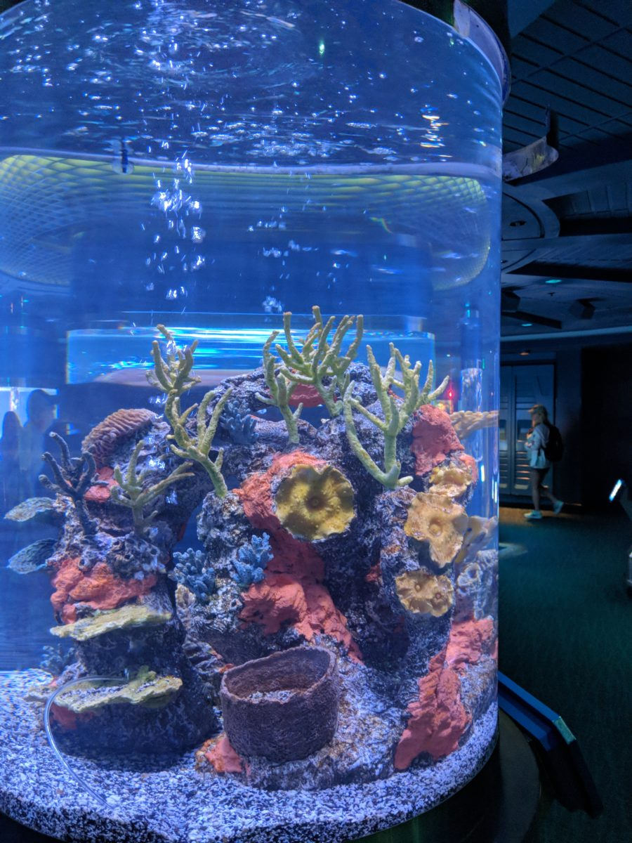 The Seas Pavilion at EPCOT at Disney World has fish, dolphins, turtles & more & is indoor & air-conditioned