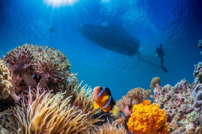 Explore Cebu in the Philippines on one of these eight great tours
