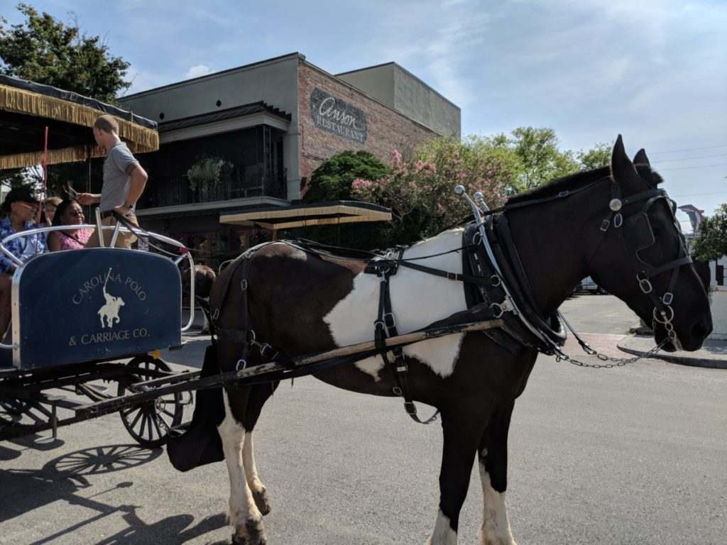 Looking to take a horse & carriage ride in Charleston, South Carolina? We make a case why you should choose Carolina Polo Carriage Company