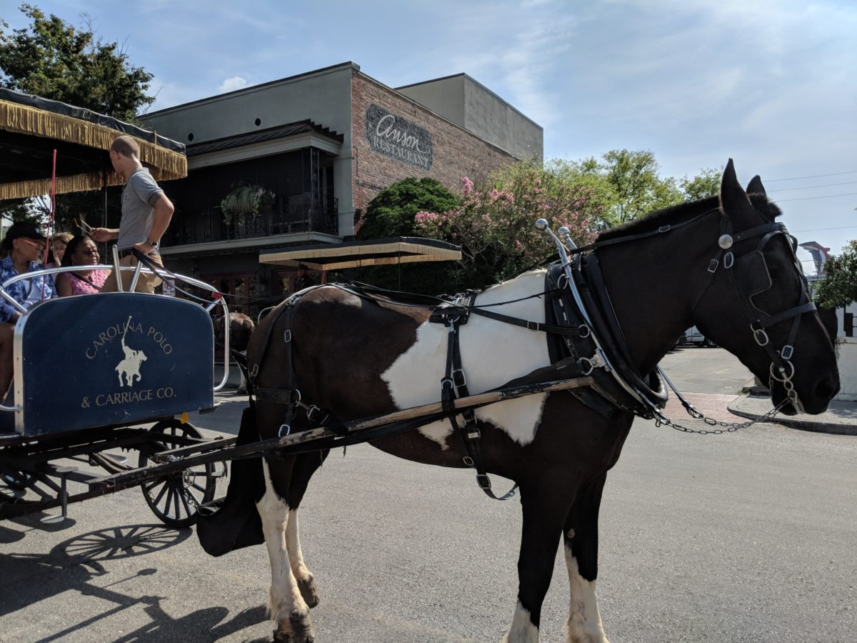 A Review of the Carolina Polo Carriage Tours Charleston SC