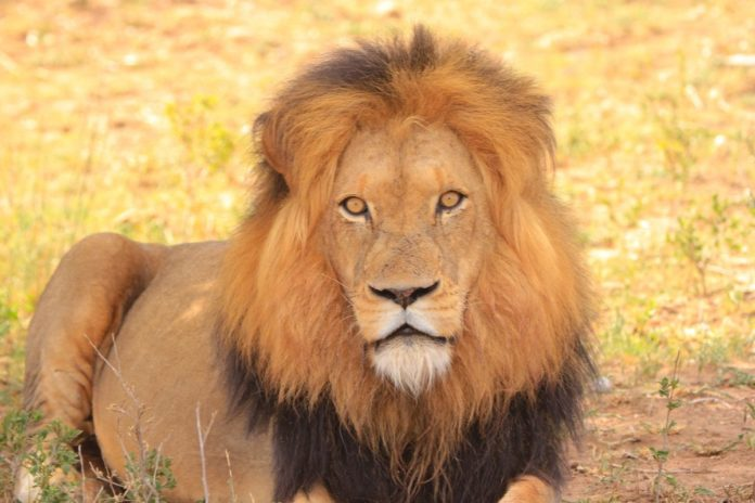 See a picture of your cat or other animal & get a free South Africa trip with Adventures by Disney